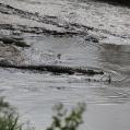 krokodil i vatten3