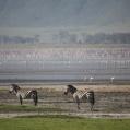 ngorongoro soda lake