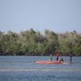 mangrove in Tanzania