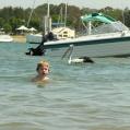simmar med pelikan