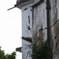 spindel i Stonetown