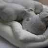 I skulpturavdelingen hentet vi denne damen som skulle være med på utstillingen