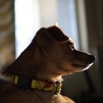 Ralf,  verdens fineste og morsomste hund <3