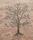 Klarlackat träd