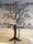 svart träd