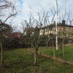 äppelträdsbeskärning2
