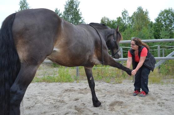 Stretching med Anna Karström. Foto: Angelica Hesselius