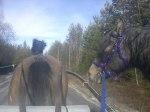 Körning med släphäst