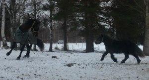Altanero och Domino in action!