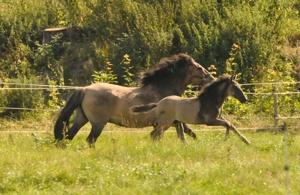 Nadja o Cavallo