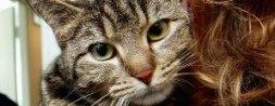 Denne nydelige katten ble forlatt på trappa til Sarpsborg Smådyrklinikk. Foto: JOHNNY HELGESEN