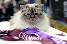 Dante. Champion i Örebro