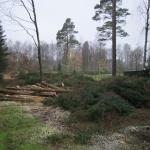 skogen 2014 006