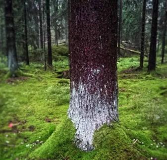 Foto: Åsa Blixt