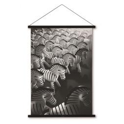 Kay Bojsesen, Zebra Foto 40x56 cm