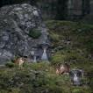 Målerås, Wildlife uggla liten