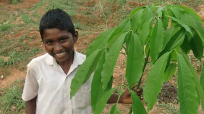 Ett av de nyplanterade gummiträden