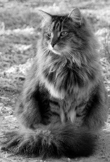 Och det här är husses stiliga Alfons. Han är helbror med Vincent och är en mycket pratglad herre i sina bästa år.