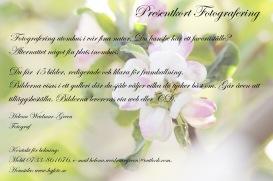 Presentkort - 15 bilder - Erbjudande