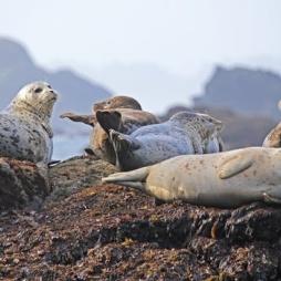 Yogadag med sälsafari och en tur till ön Vinga!