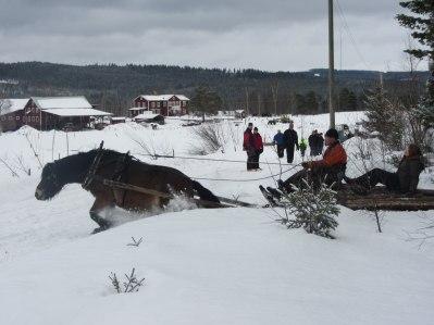 Rebell och Anders kör ut ett lass genom djupsnön!