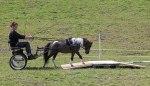 Ice tävlar, och vinner, hinderkörningen på Miniatyrhästens dag 2012