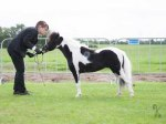 2012 MHCE Denmark  Champion senior mares 30-32
