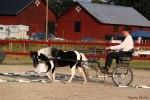 3:a Obstacle driving   2012 SMHF Utställning Knivsta