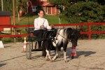 Truls 2:a Obstacle driving 2012 SMHS Utställnning Knivsta