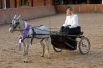 European Champion Single Pleasure Driving, Het Zwarze Water, Hollan
