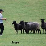 Josse