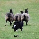 zork 2