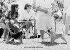 Gimlakes Ellen och Gimlakes Vackra Vera Tibro 1983