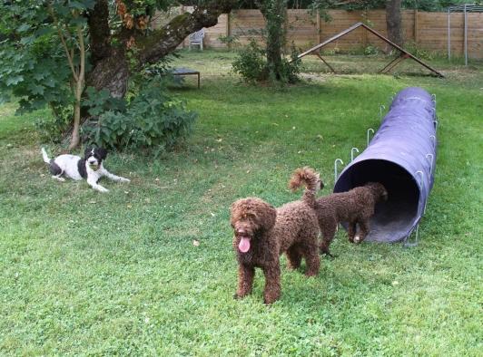 Nu är vi klara men Mocca undrar om det inte kommer något mer ur tunneln