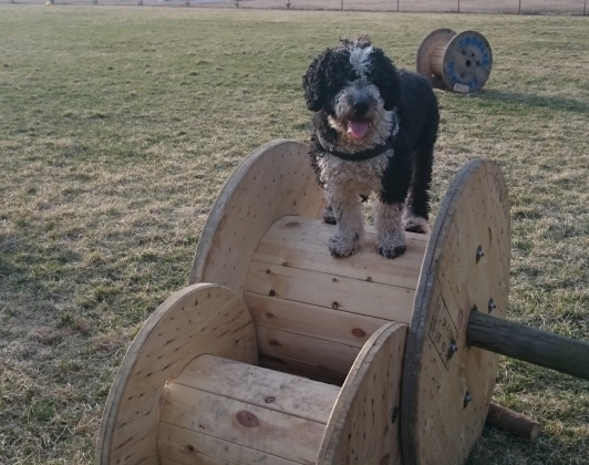 Argos tränar parkour i Torstuna