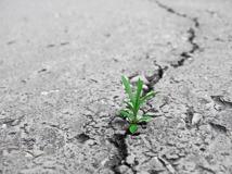 Blommande asfalt