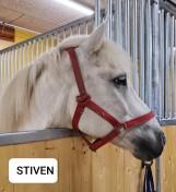 Stiven