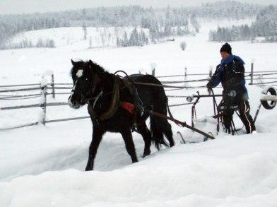Almandin o Håkan i Ragvaldsträsk