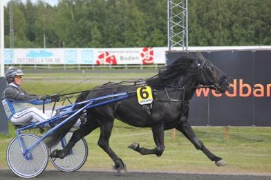 Almandins andra start juni 2014, Boden. En sjättepacering och 5000 kr, bra jobbat. Kusk John Östman.