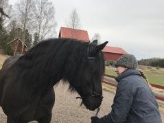 Kallblodstravaren Edelvesla är till salu som rid eller körhäst.Hon har varit avelsto här och sparsamt riden. Behöver utbildas, mycket trevlig häst. Hon är e. Järvsöfaks u. Lykke Vesla. Hon är 12 år, varit hos oss sen hon var 4 år. pRIS 20000 kr inkl moms