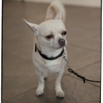 GalleriZoo-2014-Ann Charlotte Photography-®-33