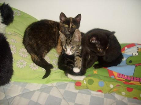 Laura, Holger och Svartan som kattungar.