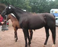 Lacritza 2008