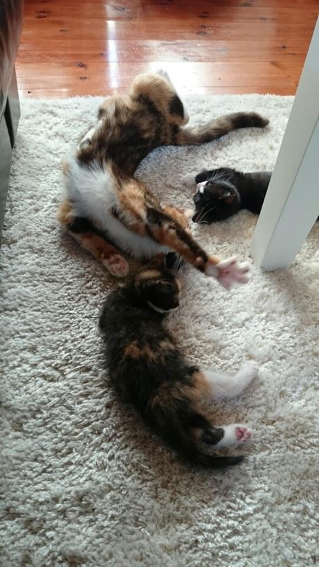 Sovstund för Mini, Muff och Gullan