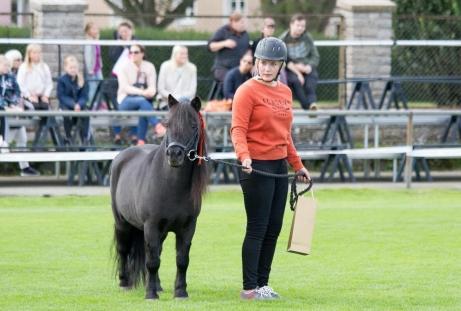 Origo på Kalmar Horse Show 2017. Foto: Matilda Sjöberg