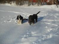 Yonna (till vänster) och Astraia (till höger) ute och leker i snön.