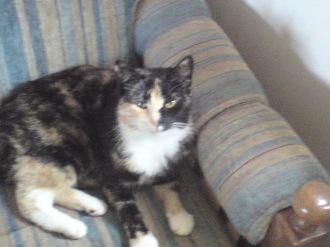 Här är vår katt Maja.