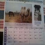 Nordsvenska hästens kalender
