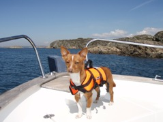 Kasper has his own life jacket - Click to enlarge
