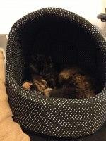 Essy(stallets katt)har fått ett nytt hus.
